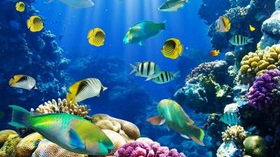 fish211